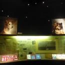 Собаки, принимавшие участие в освоении космоса: Лайка, Чайка и Лисичка, Белка и Стрелка (Вильна и Капля).
