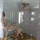 Чучела животных в Краеведческом музее в Национальном парке «Скадарское озеро».