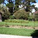 Цветы в тропическом парке. Дендрарий. Сочи.