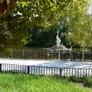 Пеликан в пруду Нижнего парка Дендрария. Сочи.