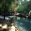 Пруд в Нижнем парке Дендрария. Сочи.