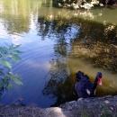 Пруд с лебедями в Нижнем парке Дендрария. Сочи.