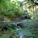 Водопад у пруда с лебедями. Нижний парк. Дендрарий. Сочи.