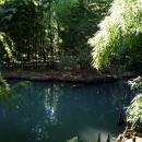 Лебеди в пруду Нижнего парка Дендрария. Сочи.