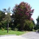 Прогулочные аллеи Дендрария в цвету.