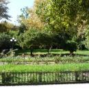 Розарий в Нижнем парке Дендрария в Сочи.