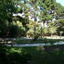 Розарий в Нижнем парке Дендрария. Сентябрь в Сочи.