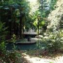 Пруд с лебедями. Нижний парк Дендрария. Сочи.