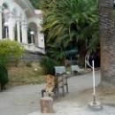 Львица у колоннады в Гагре. Абхазия.