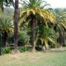 Парки Старой Гагры в Абхазии.