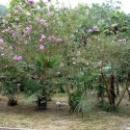 Цветущий парк Старой Гагры. Абхазия.