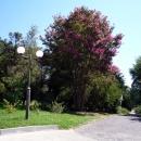 Парк пансионата Псоу. Гагра. Абхазия.