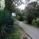 Магнолия крупноцветная. Парк Ривьера в Сочи.