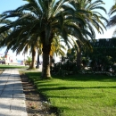Пальмовая аллея у пирса. Курорт Пицунда. Абхазия.