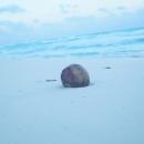 Кокос на белоснежном песке пляжа Пунта-Каны.