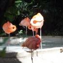 Фламинго на курорте Пунта-Кана.