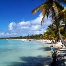Пальмы растут прямо у океана. Курорт Пунта-Кана.