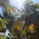 Курорт Пунта-Кана - это место встречи всех пальм.