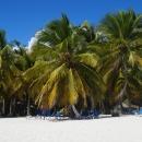 Пальмовый рай пляжа Баваро. Пунта-Кана.