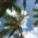 Пальмы на пляже Баваро. Пунта-Кана.