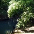 Пруд с лебедями. Нижний парк Дендрария в Сочи.