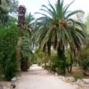Отдых в Тунисе на аллеях Карфагена.