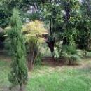 Парк «Ривьера» в Сочи с редкими вечнозелеными деревьями.
