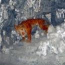 Саблезубый тигр, Сафари-парк в Геленджике.