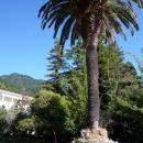 Парк санатория Амра. Курорт Гагра в Абхазии.