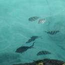 Тропические рыбки в Санто-Доминго.