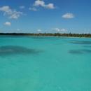 Кораллы у острова Саона в Доминикане.