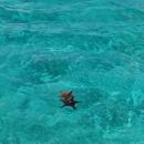 Морские звезды в «Натуральном бассейне» острова Саона.