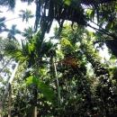 Природа Сейшельских островов.