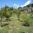 Плодовые деревья в парке Дендрарий. Сочи.
