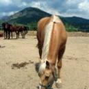 Отдых в Судаке - прогулка на лошадях