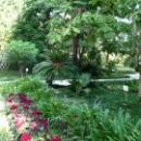 Деревья в цвету. Ботанический сад Сухума.