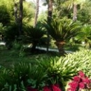Солнце в Ботаническом саду Сухума.