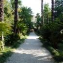 Красота Ботанического сада. Сухум.