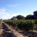 Виноградники семьи Торрес