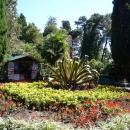 Клумба с агавой. Верхний парк Дендрария в Сочи.