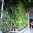 Зимний сад в Воронцовском дворце, реликтовые растения и скульптуры.
