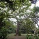 Воронцовский парк разбит в пейзажном (ландшафтном) стиле.