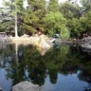 Лебединое озеро в Воронцовском парке.