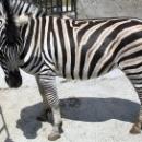 Частный Зоопарк «Сказка» в Ялте