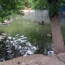 Пруд для водоплавающих птиц в Липецком зоопарке.