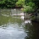 Птицы в пруду зоопарка города Липецк.