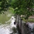 Водоплавающие птицы в Липецком зоопарке.