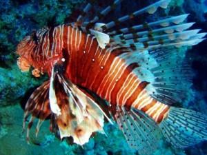 Океанариум в Анапе