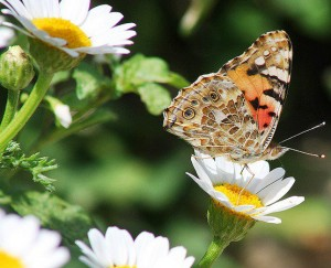 Долина бабочек, Фетхие, Турция