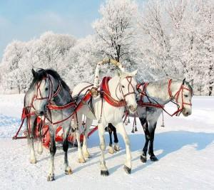 Тройка лошадей - Великий Устюг